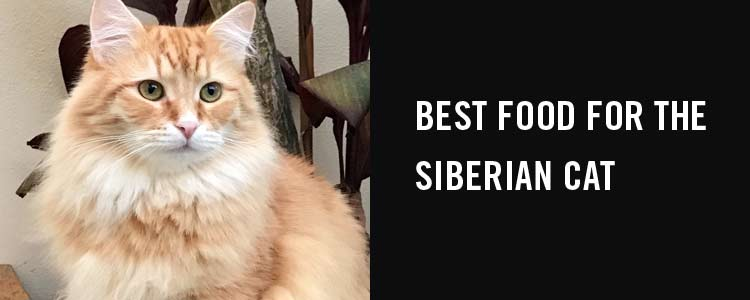 Best food for the Siberian cat