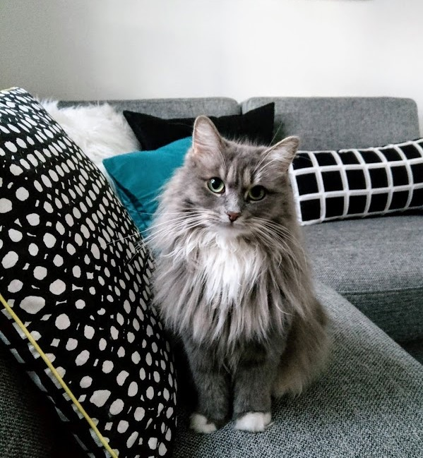 Nila the Siberian from Copenhagen
