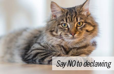 Declawing your cat – please be humane and don't