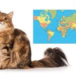 Siberian Cat Breeders