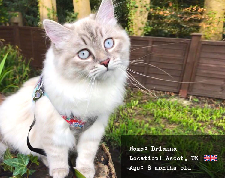 Brianna, also known as Briebrie the Siberian Princess