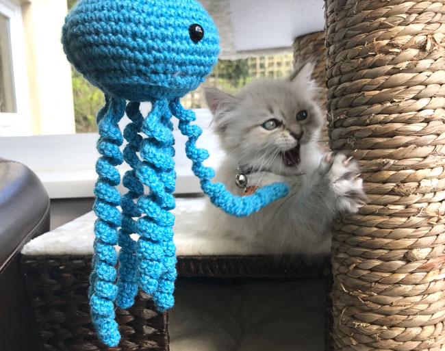 Valentino the Siberian cat