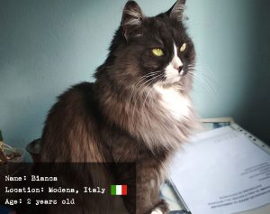 Bianca the Italian Siberian kitty