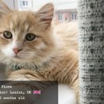 Fiore the Siberian Cat