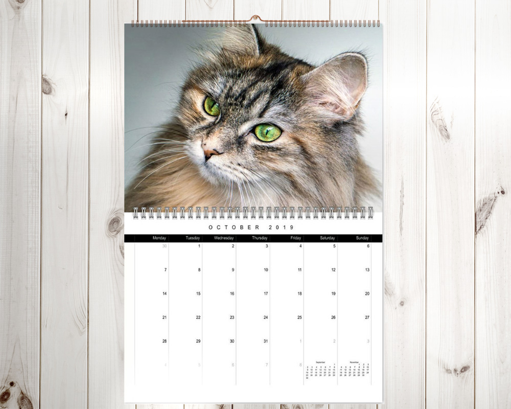 Siberian cat wall calendar
