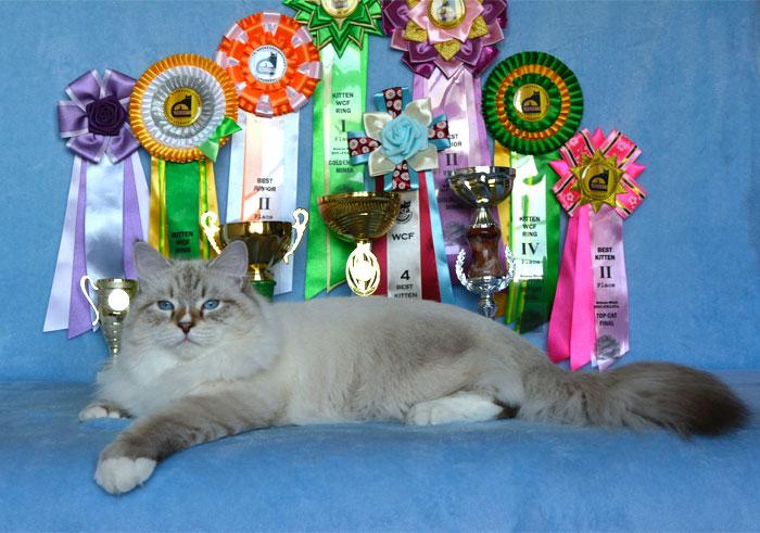 Moubani Cats – Siberian cat breeder in Seattle - awards